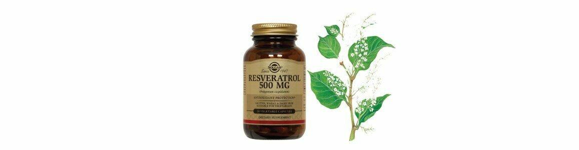 solgar resveratrol suplemento antioxidante anti envelhecimento